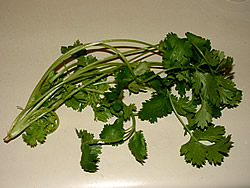 Cilantro or Corainder