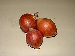 Shallot of Small Red Onion
